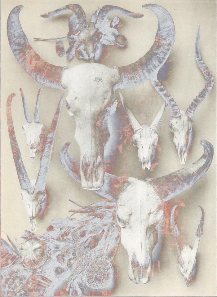 skullssolar